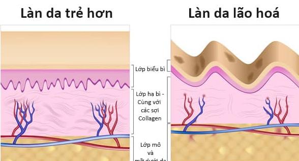 tác dụng tuyệt vời của collagen, tac dung tuyet voi cua collagen